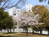 名古屋国際会議場と堀川沿いのさくら